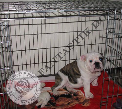 Домашняя клетка для собаки